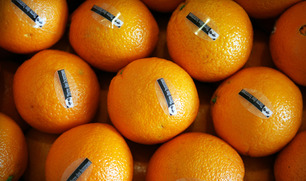 1216_orange_sale_img1_embed