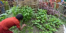 6088_tdh_bangladesh_jardins_misc