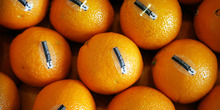 6902_orange_sale_img1_misc